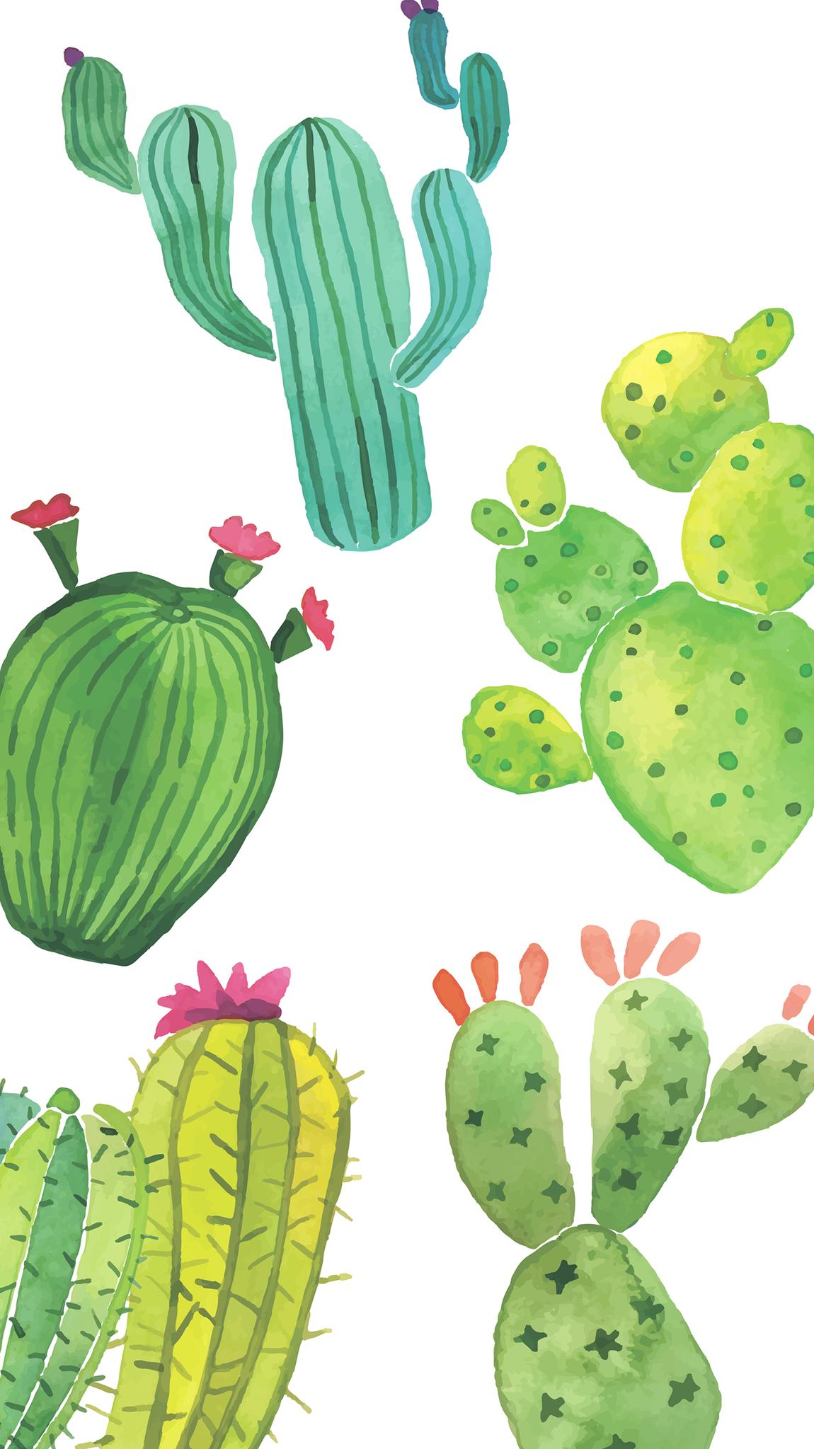 13 Cute Cactus Wallpapers On Wallpapersafari