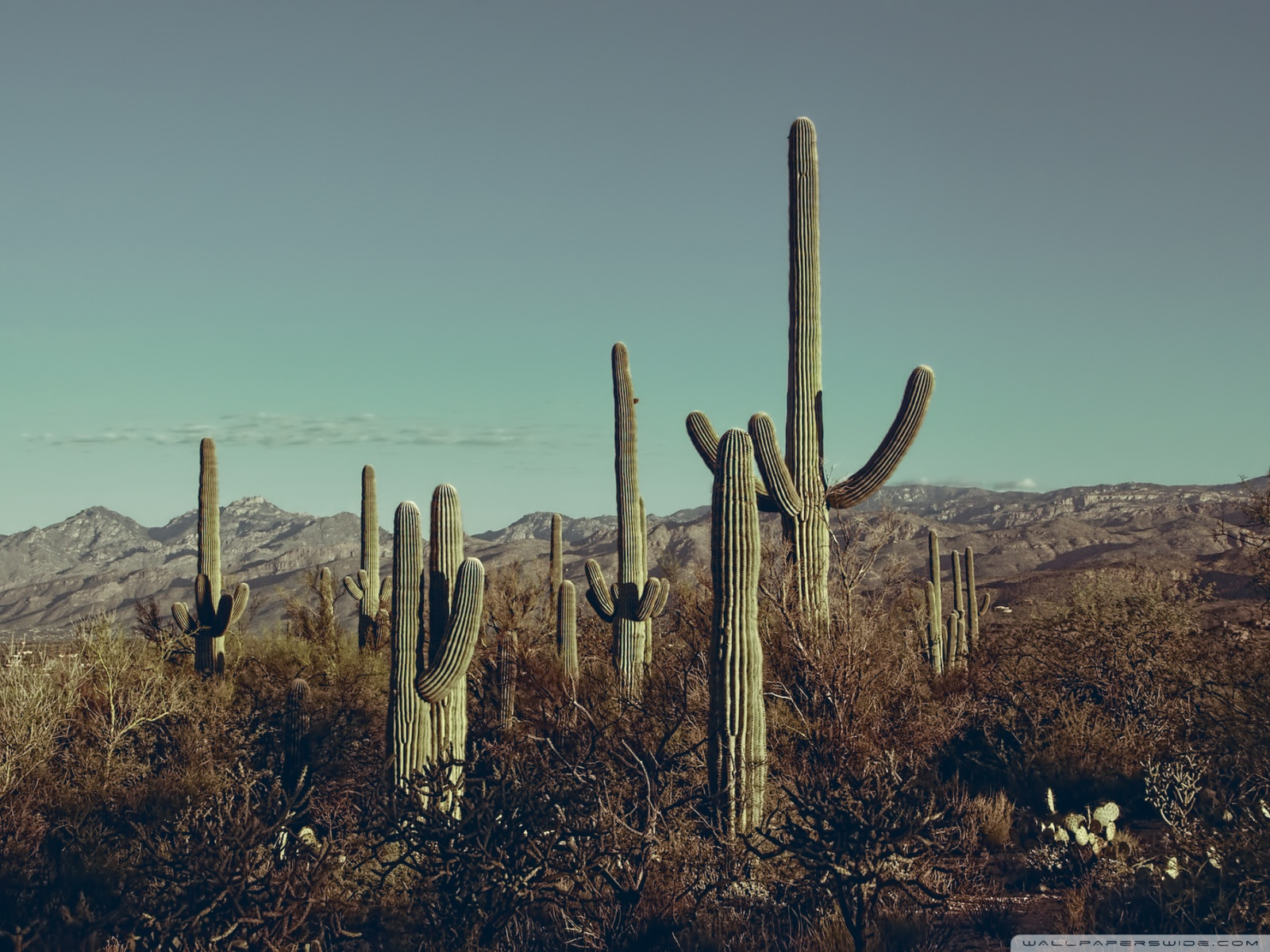 Saguaro National Park East Arizona 4K HD Desktop Wallpaper for 1600x1200