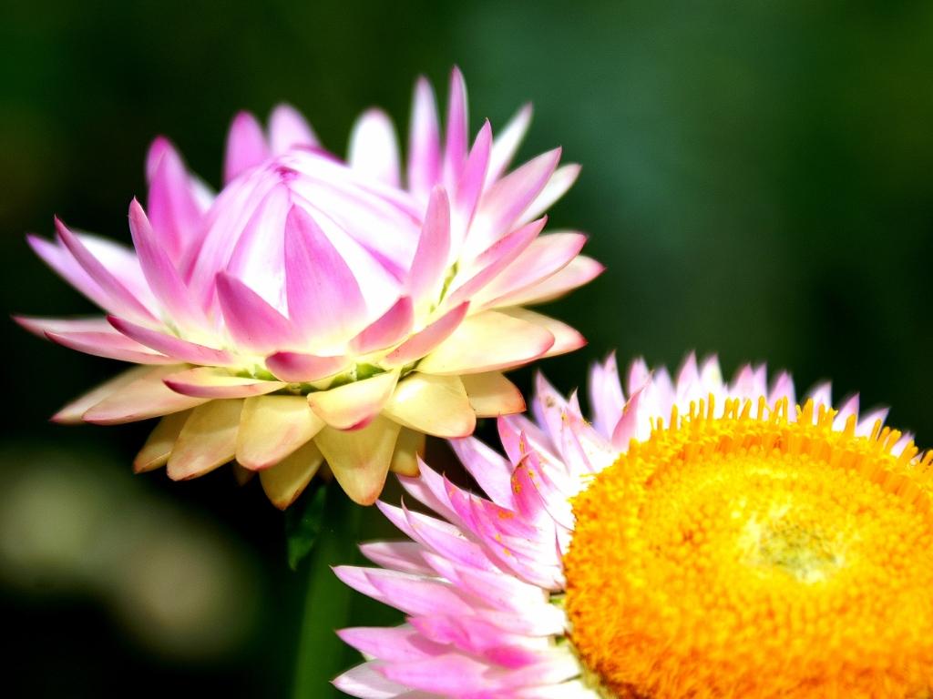 foto de Free download Flower Power Wallpaper 1 by superjuju29 [1024x768 ...
