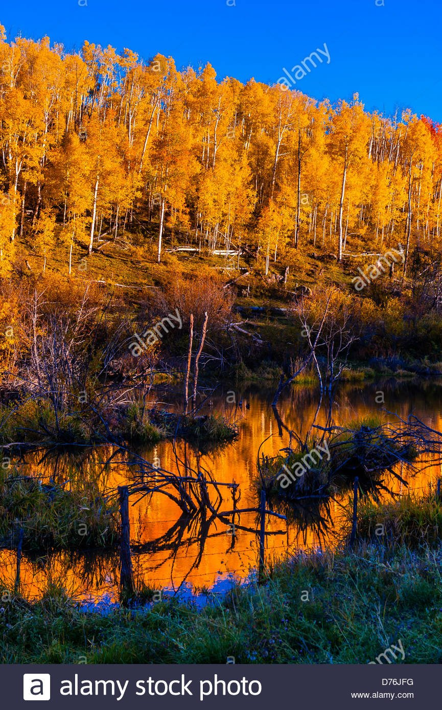 Fall color Last Dollar Road between Ridgway and Telluride with 865x1390