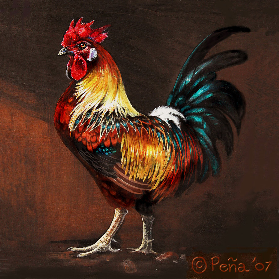Rooster Wallpaper 900x900