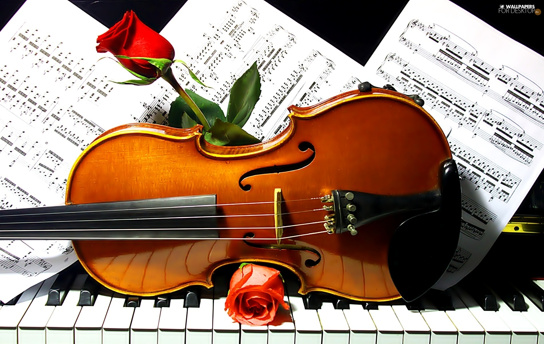 Roses Tunes Violin Piano For Desktop Wallpapers 1900x1200