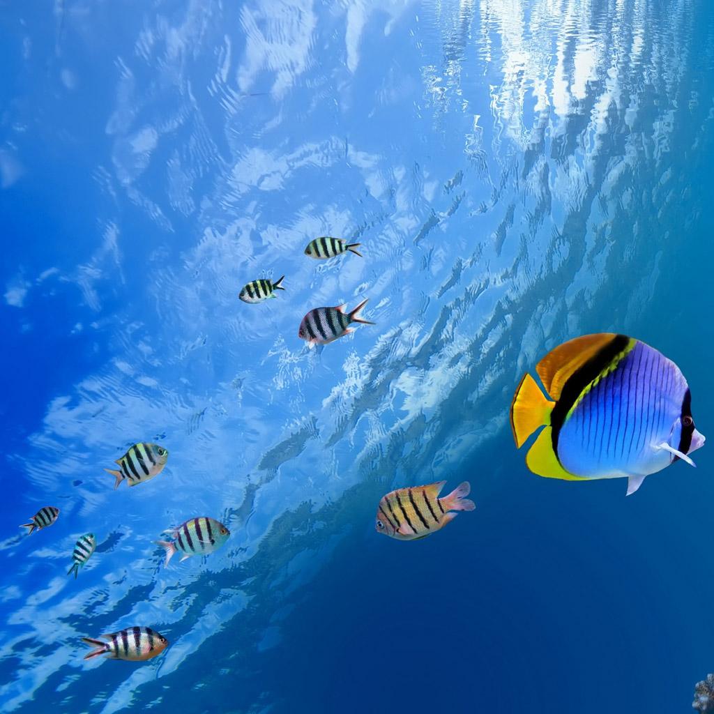 Tropical Fish Wallpaper - WallpaperSafari  Tropical Fish W...