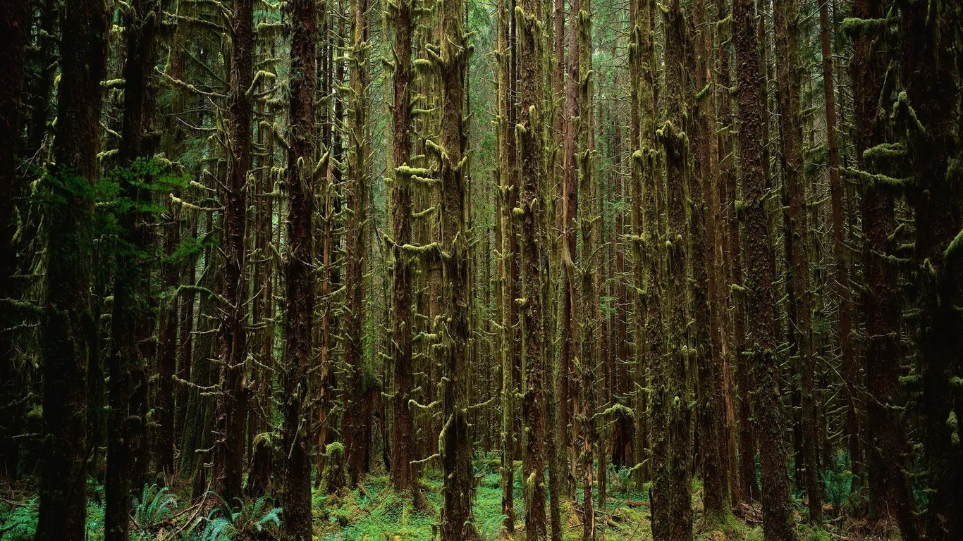 Creepy Forest Wallpaper 9480 1366x768