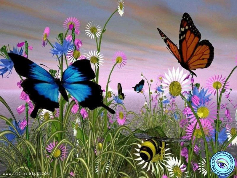 Source URL httppicturespkcomview butterflies 800x600html 800x600
