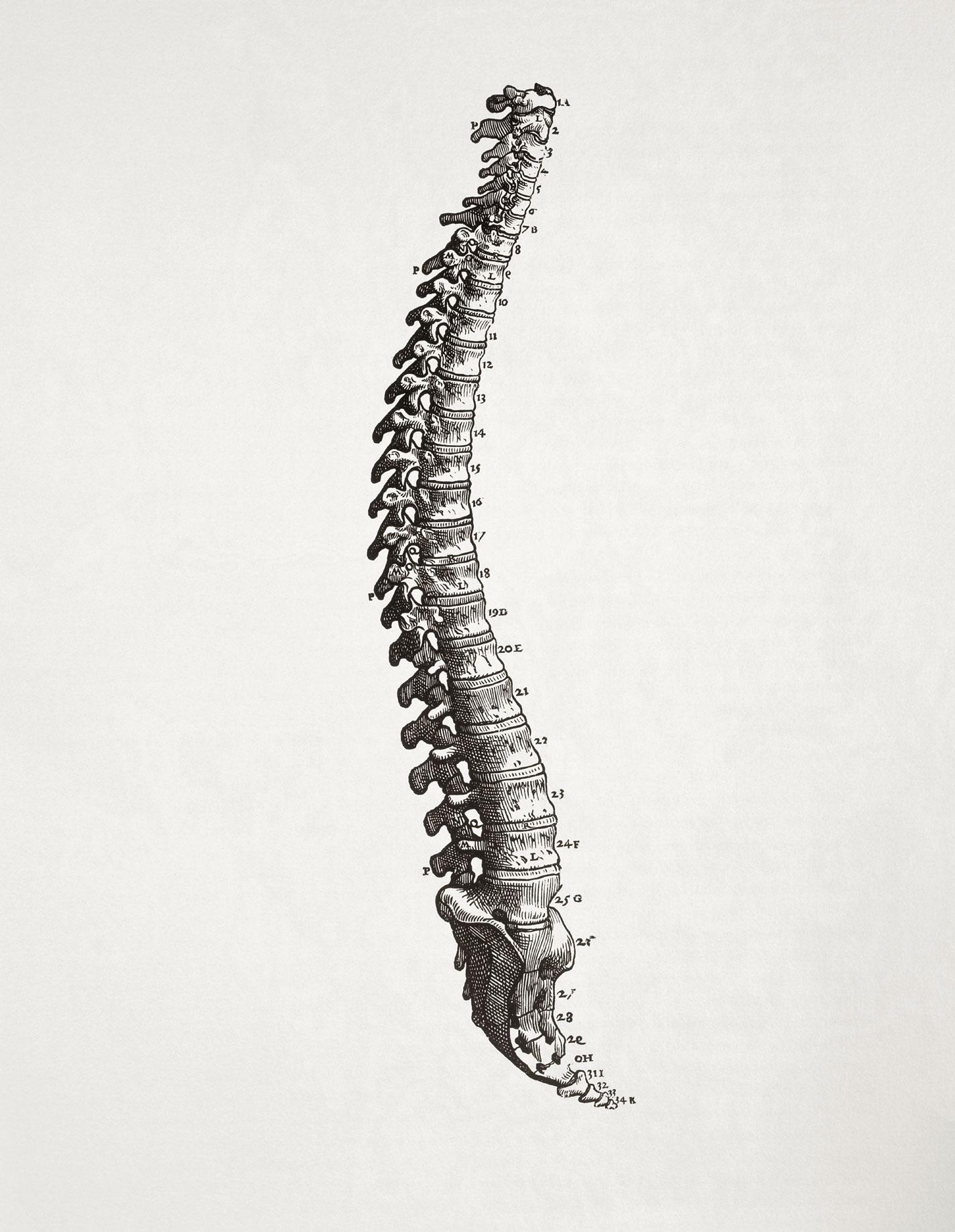 47 Human Anatomy Wallpaper On Wallpapersafari