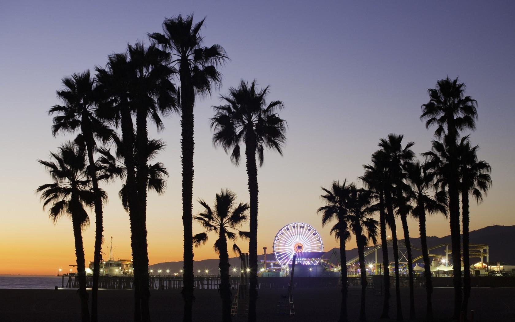 Download California Palm Trees Wallpaper 1680x1050