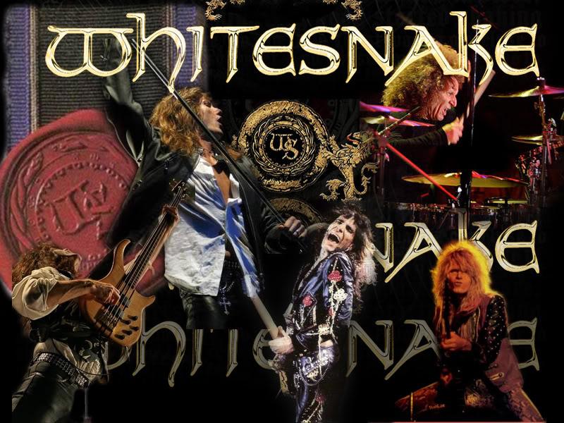 Whitesnake Wallpaper photo whitesnakewallpaperjpg 800x600