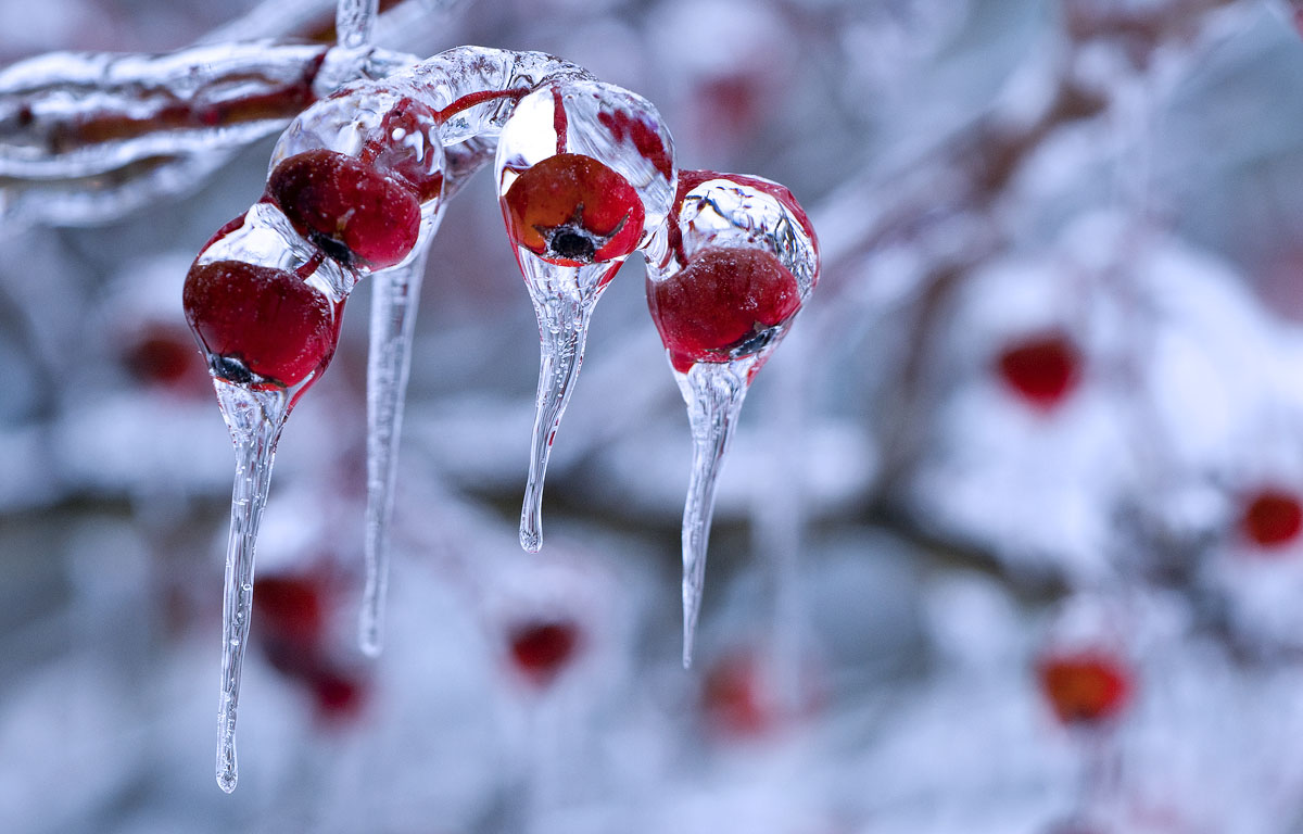 hd wallpapers 2012 winter nature photography 1200x768