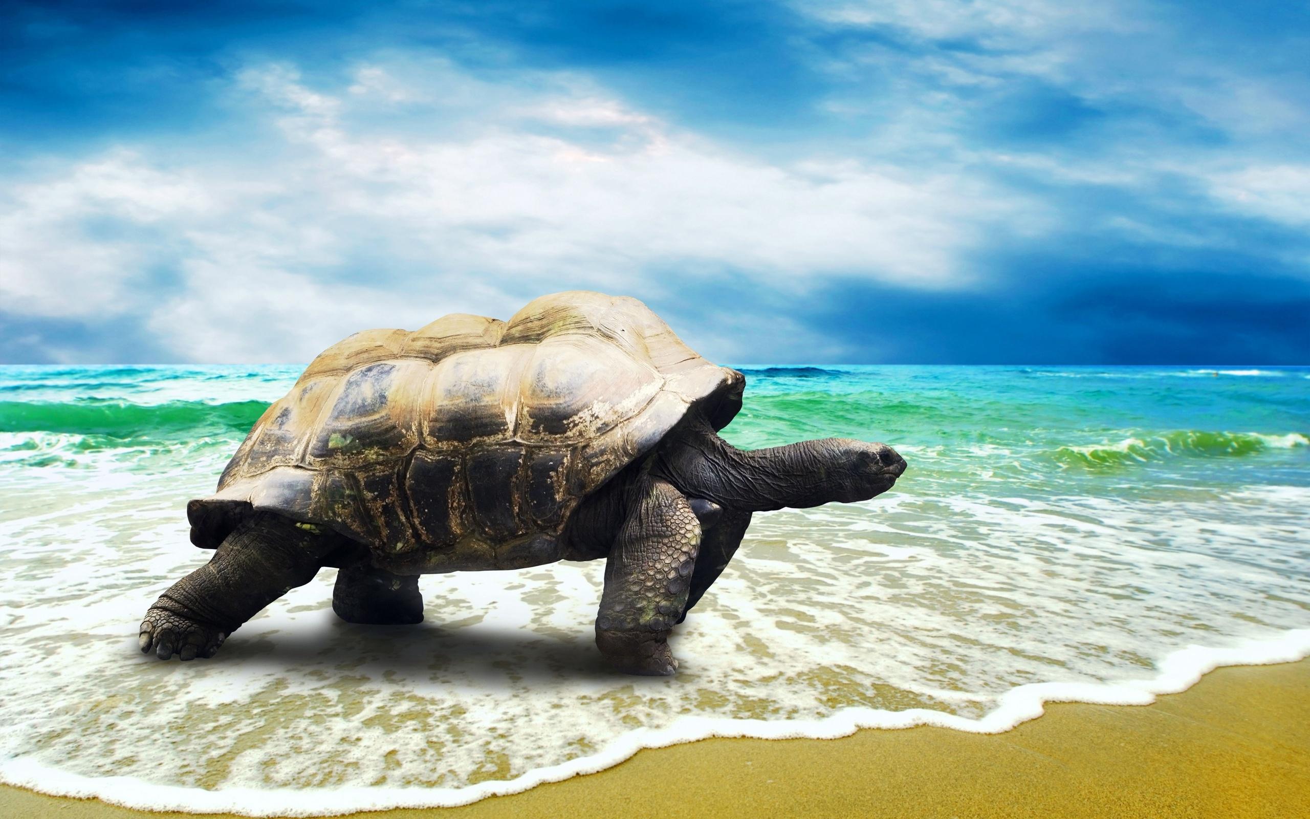 HD Turtle Wallpaper Download 109045 Wallpaper Animal 2560x1600