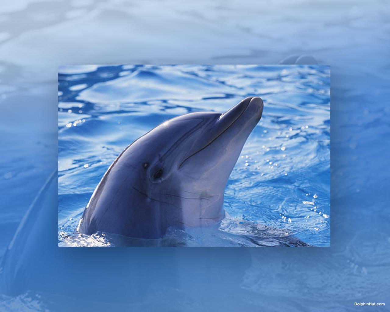 dolphin browser wallpaper wallpapersafari