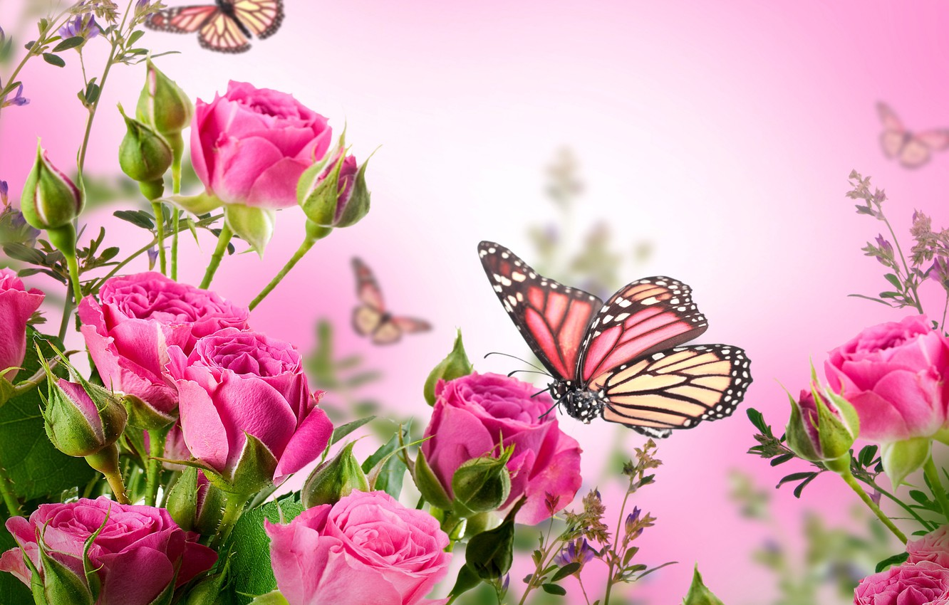 Wallpaper butterfly flowers roses flowering pink blossom 1332x850