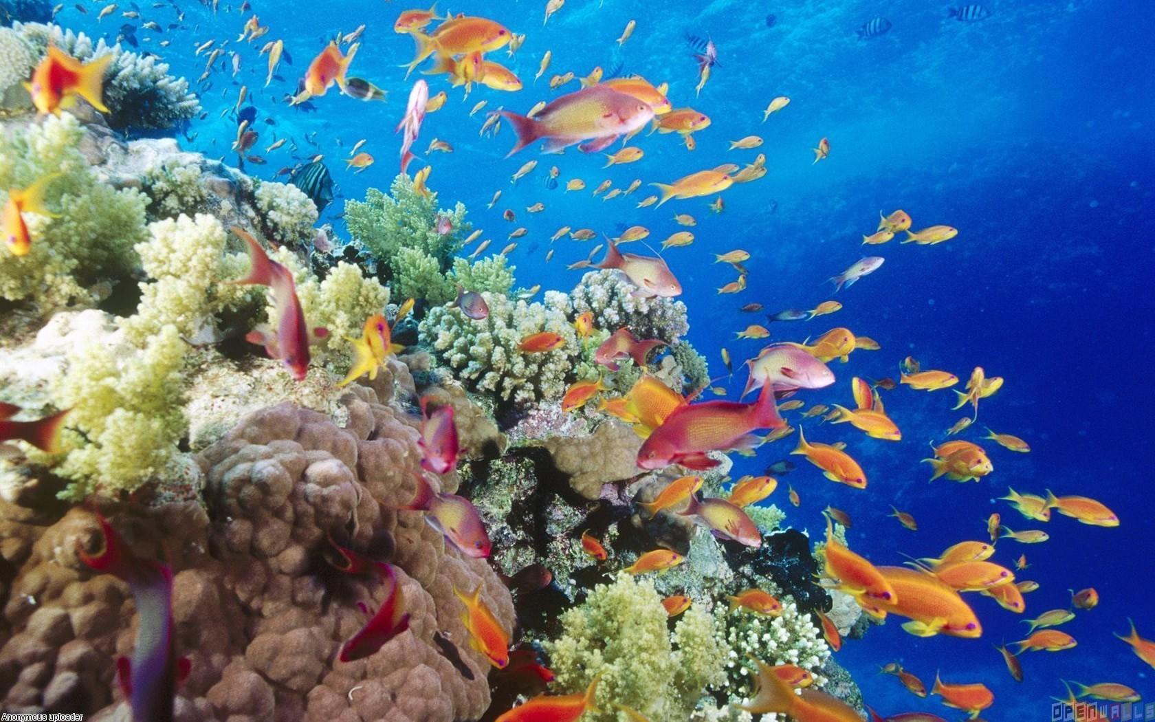 Free Download Tropical Fish Wallpaper 13463 Open Walls 1680x1050