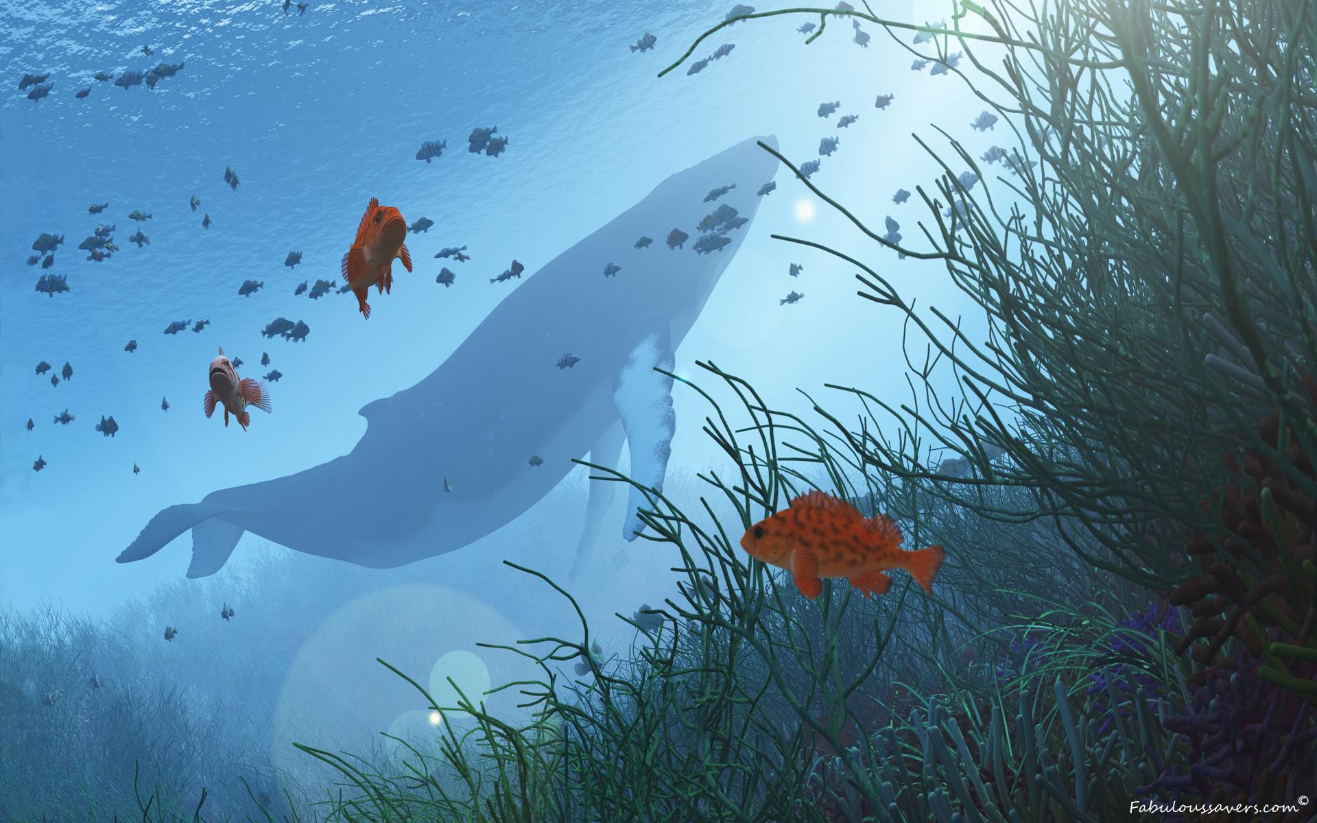 Humpback Whale wallpaper   1185476 1920x1200