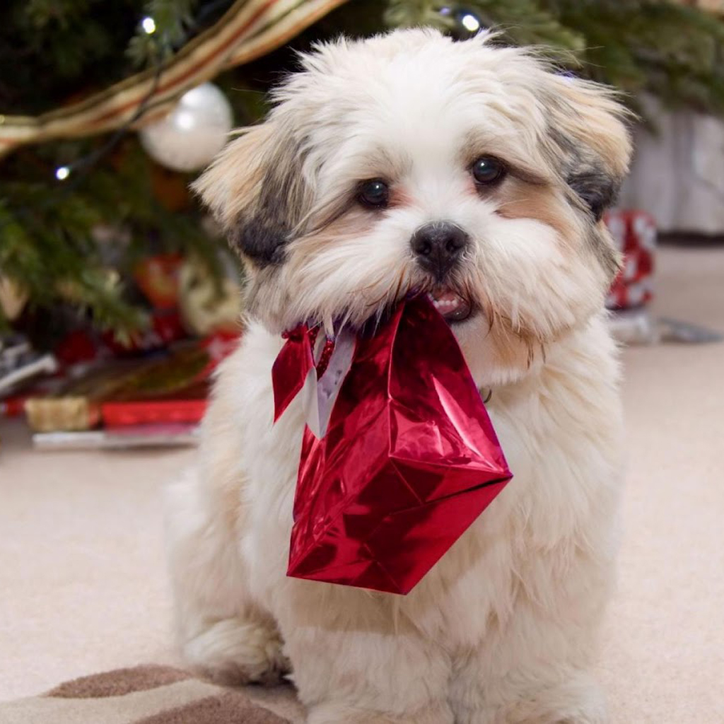 Christmas Puppies Wallpapers Free
