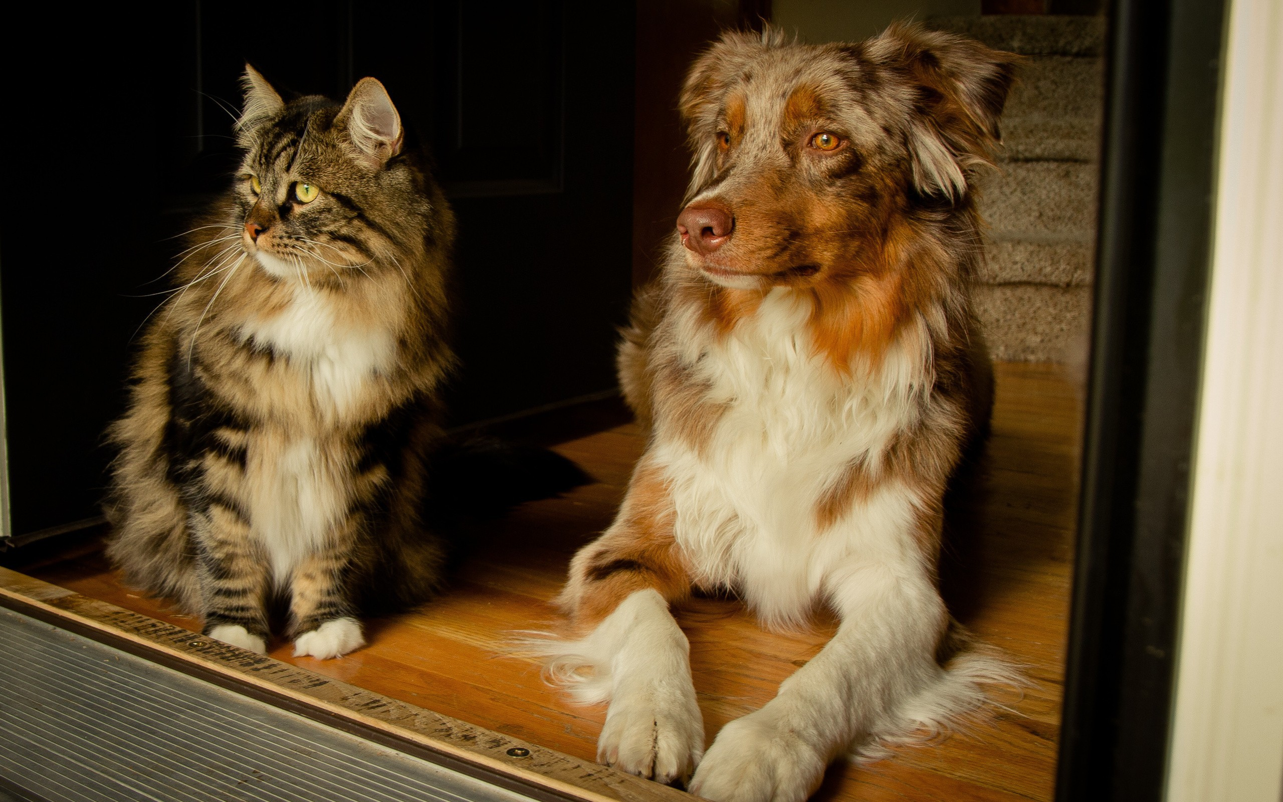 Cat And Dog Friends Wallpapers Images Pictures Wallpaper 2560x1600