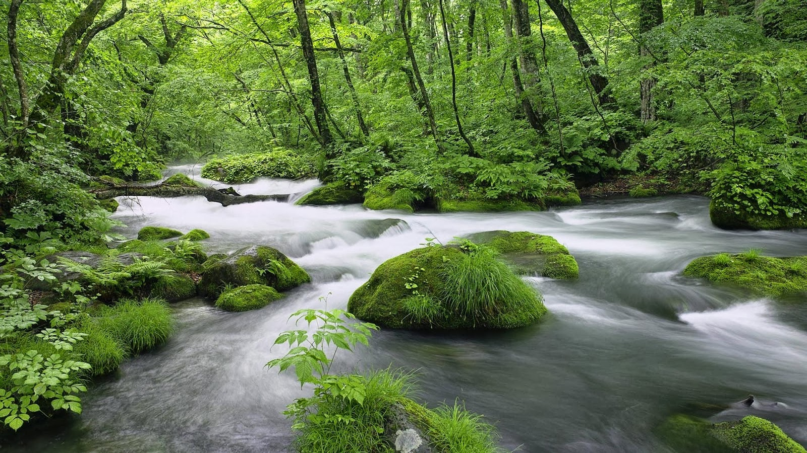 Free download Full HD Size Nature Wallpapers Downloads Full HD High