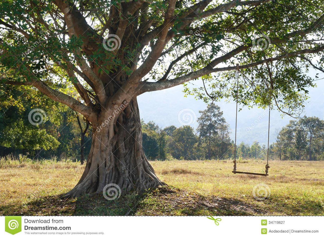 Tree Swings Photography Big tree with swing royalty stock 1300x957