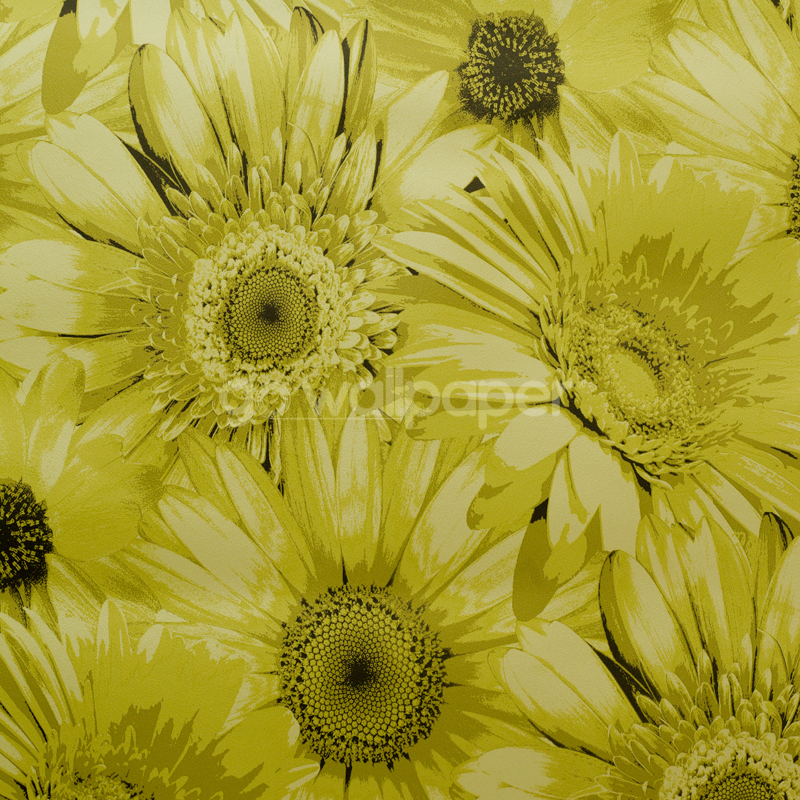 Debona Gerbera Daisy Flower Lime Wallpaper 5000 800x800