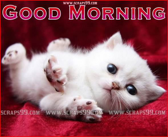 Cute Good Morning Wallpaper Wallpapersafari