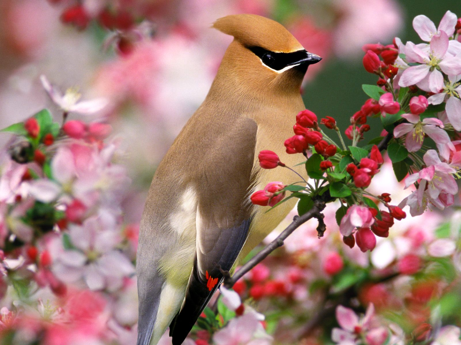 for flower lovers Flowers desktop wallpapers with small birds 1600x1200