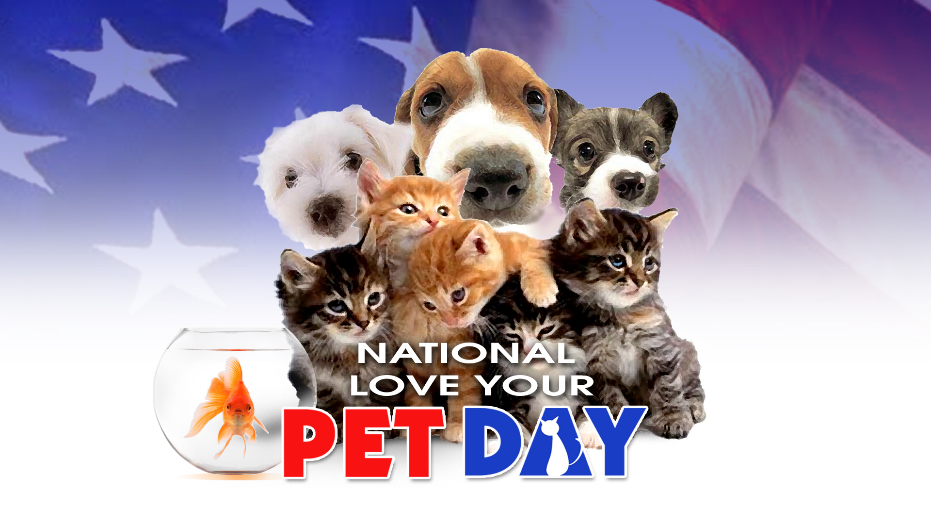 Photo Gallery National Love Your Pet Day   9 10 News 1920x1080