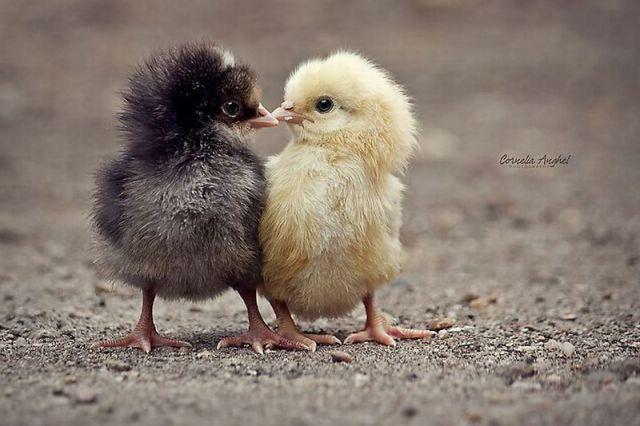 Funny And Cute Animals 22 Widescreen Wallpaper   Funnypictureorg 640x426