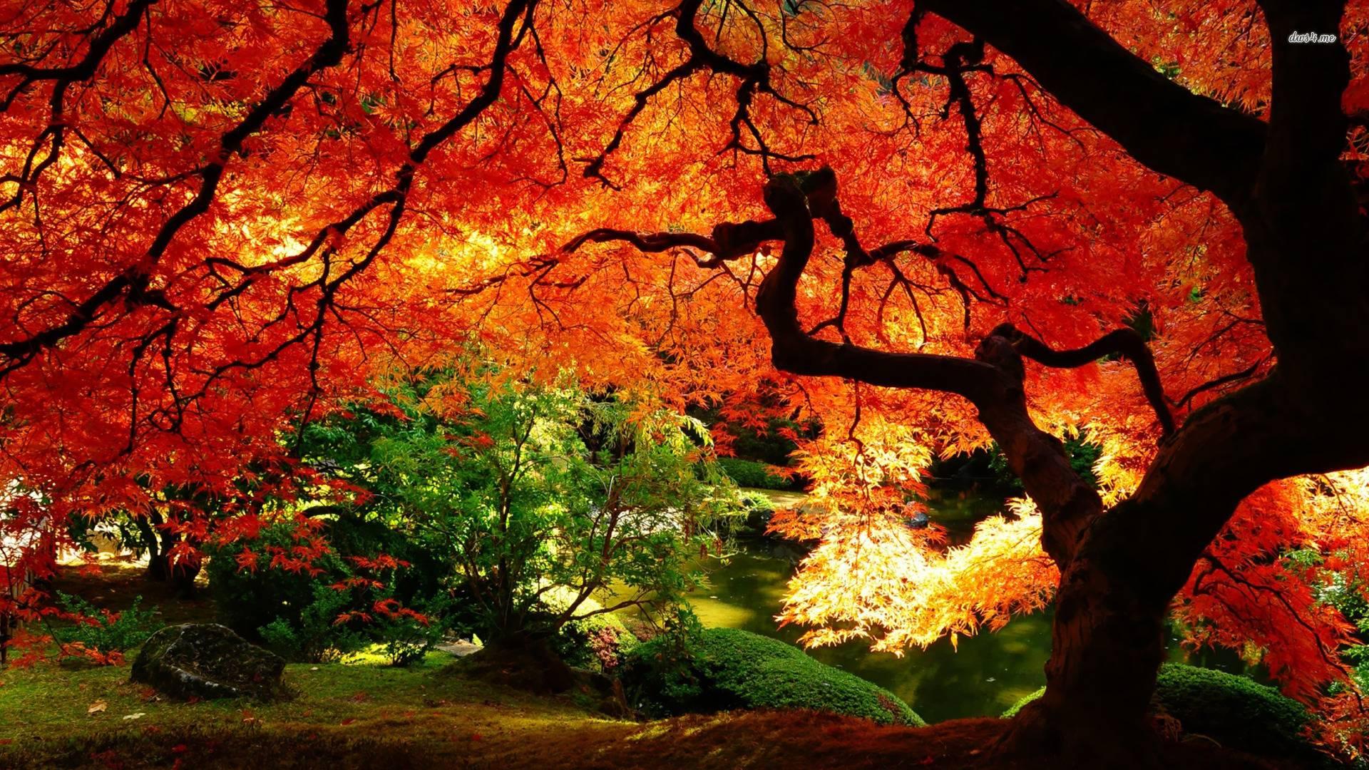 Autumn Landscape Wallpapers 1920x1080