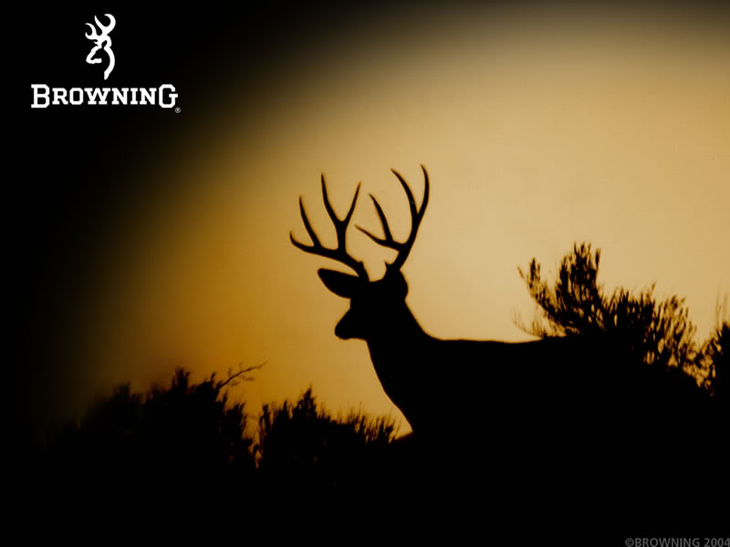 Browning Deer Graphics Code Browning Deer Comments Pictures 800x600