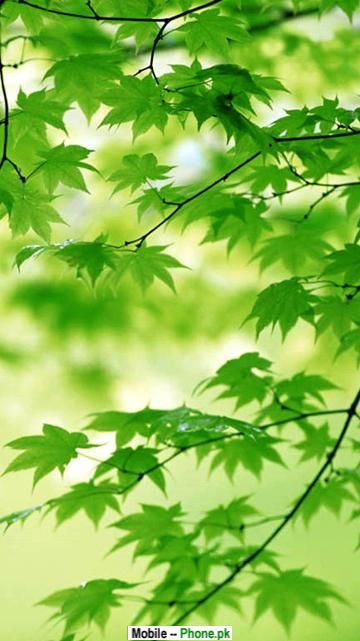 Green Leaf Wallpaper Nature Mobile Wallpaperjpg 360x641