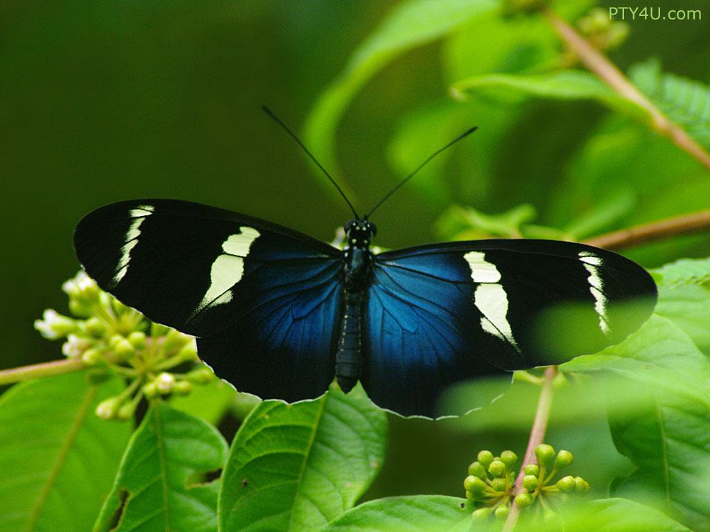 Blue Butterfly Wallpaper 10181 Hd Wallpapers in Cute   Imagescicom 1024x768