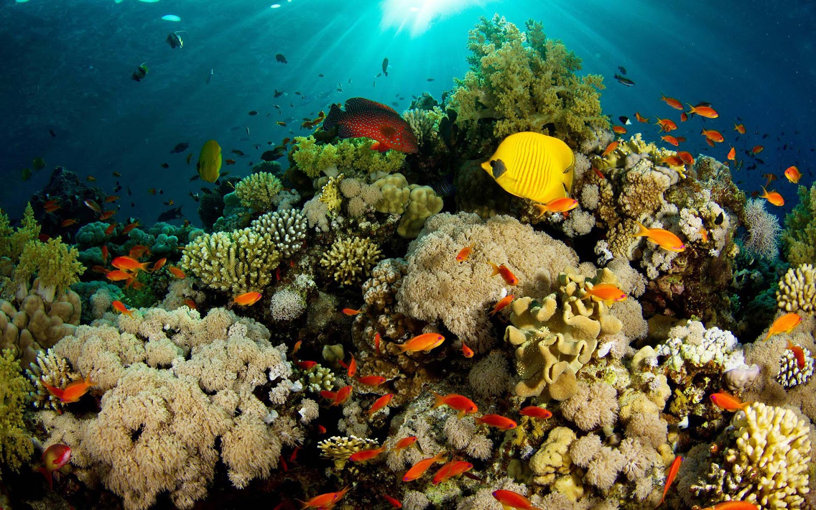 Widescreen Desktop Reef Fish Wallpaper - WallpaperSafari  Coral Reef Wallpaper 1920x1080