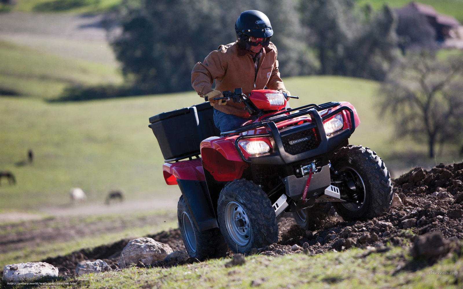 Download wallpaper Honda ATV FourTrax Foreman 2012 FourTrax Foreman 1600x1000