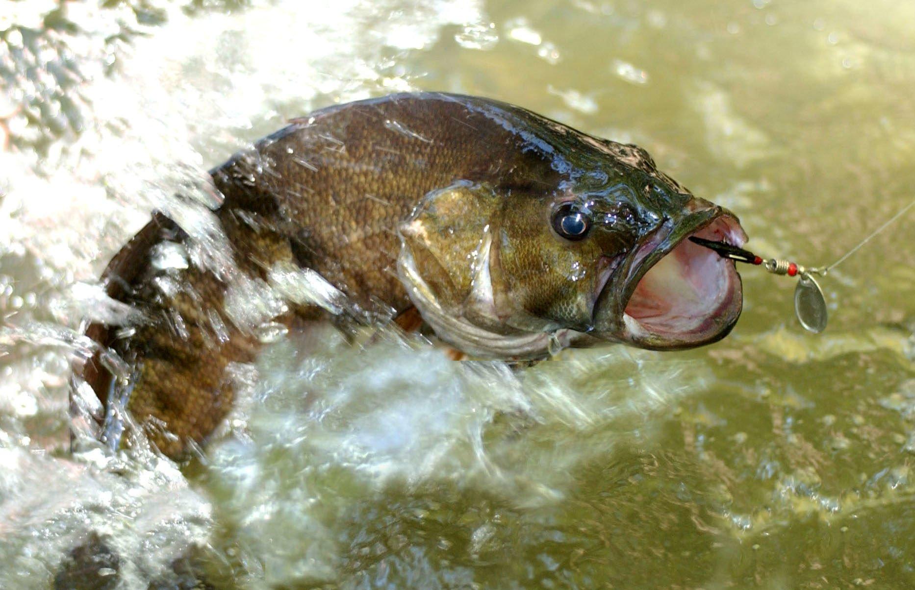 FISHING fish sport fishes bass battle wallpaper 1866x1204 324648 1866x1204