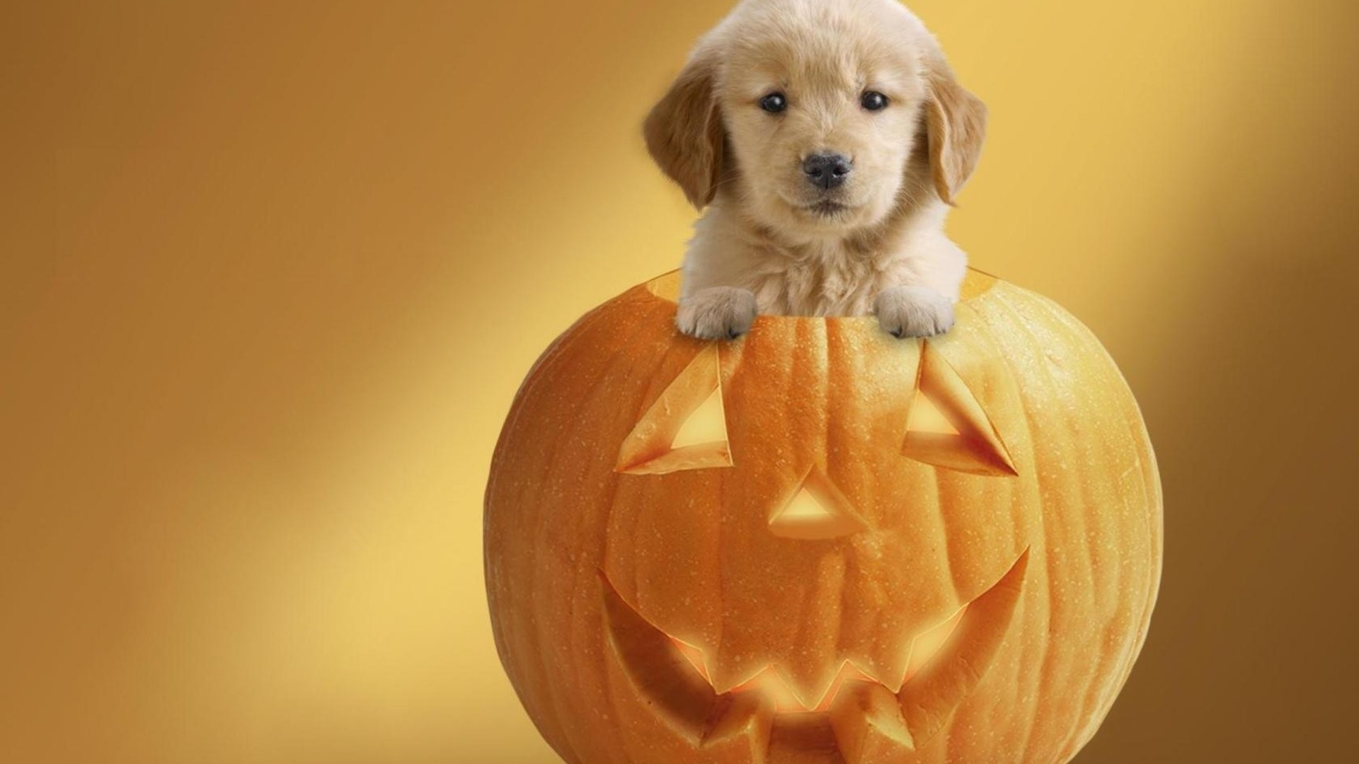 Cute Halloween Wallpapers 62 images 1920x1080