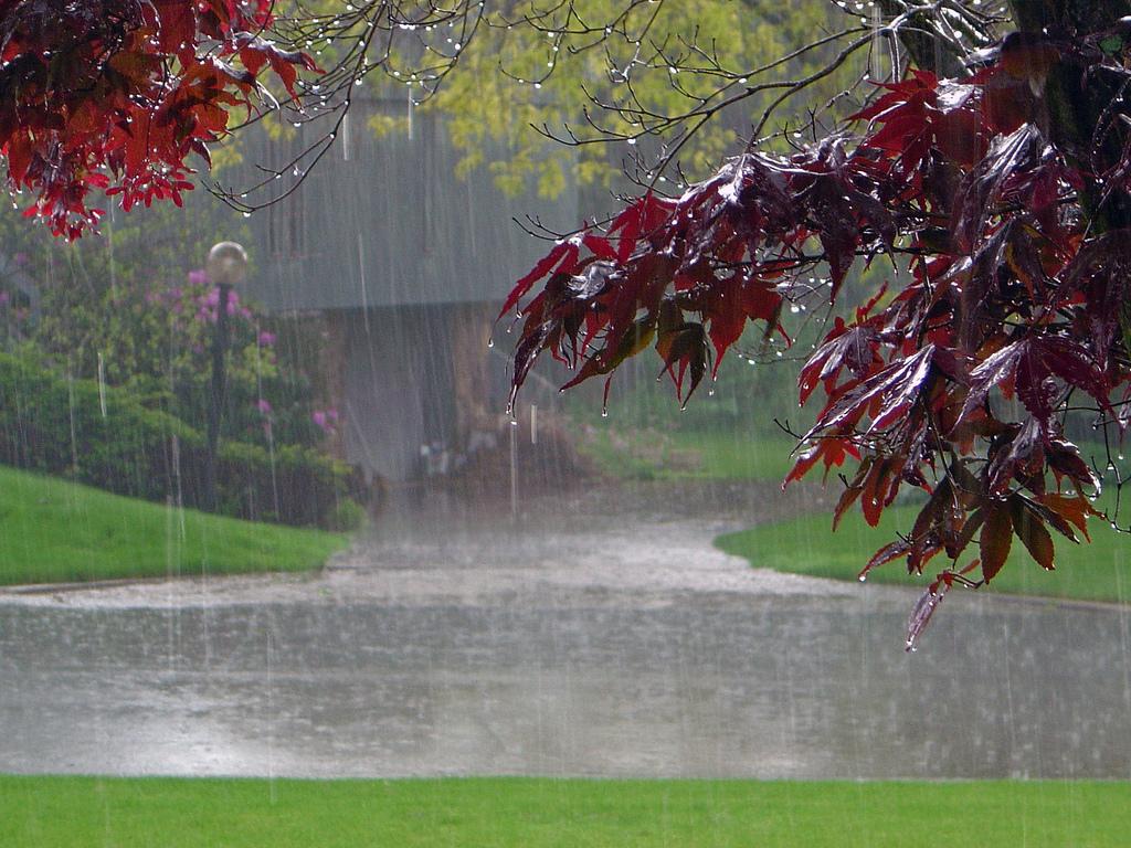 Rain Falling Wallpapers 1024x768