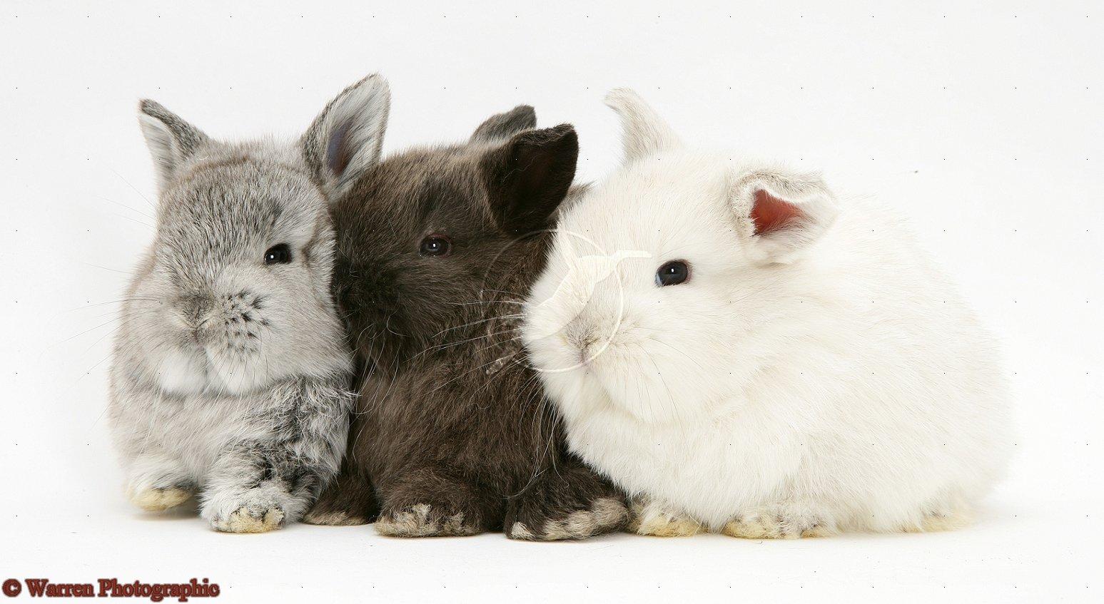 cute baby bunnies wallpaper wallpapersafari