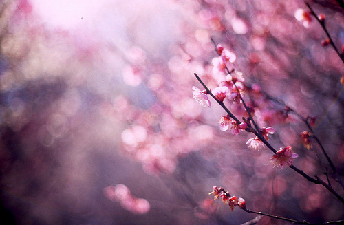 Beautiful Tumblr Backgrounds Images Pictures   Becuo 500x327