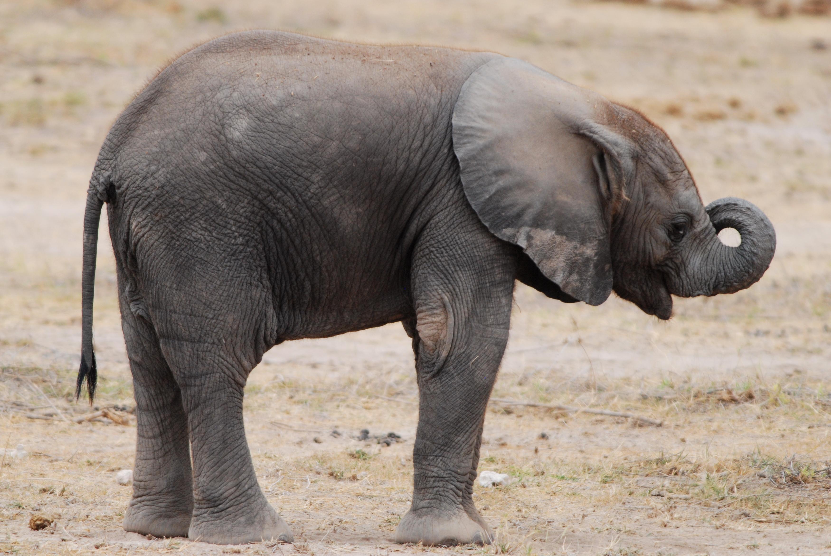 elephant baby elephant baby elephant wallpaper elephant elephant 3500x2343