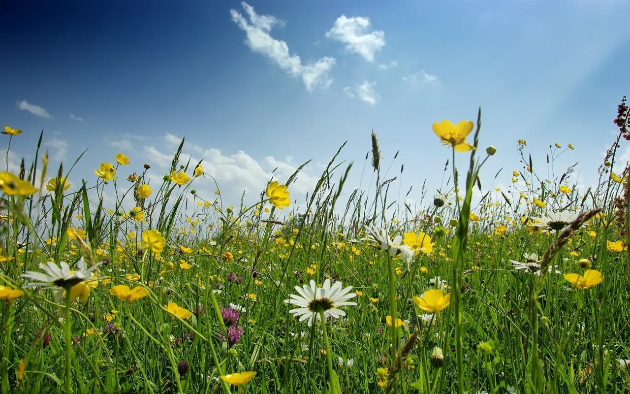 Field Of Spring Flowers Wallpaper Wallpapersafari