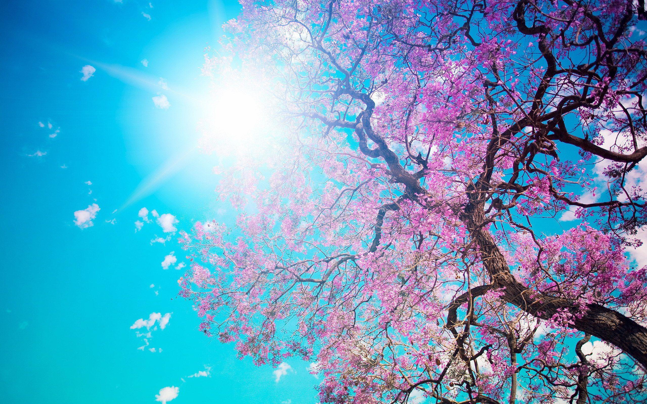 Spring Nature Photos 2560x1600