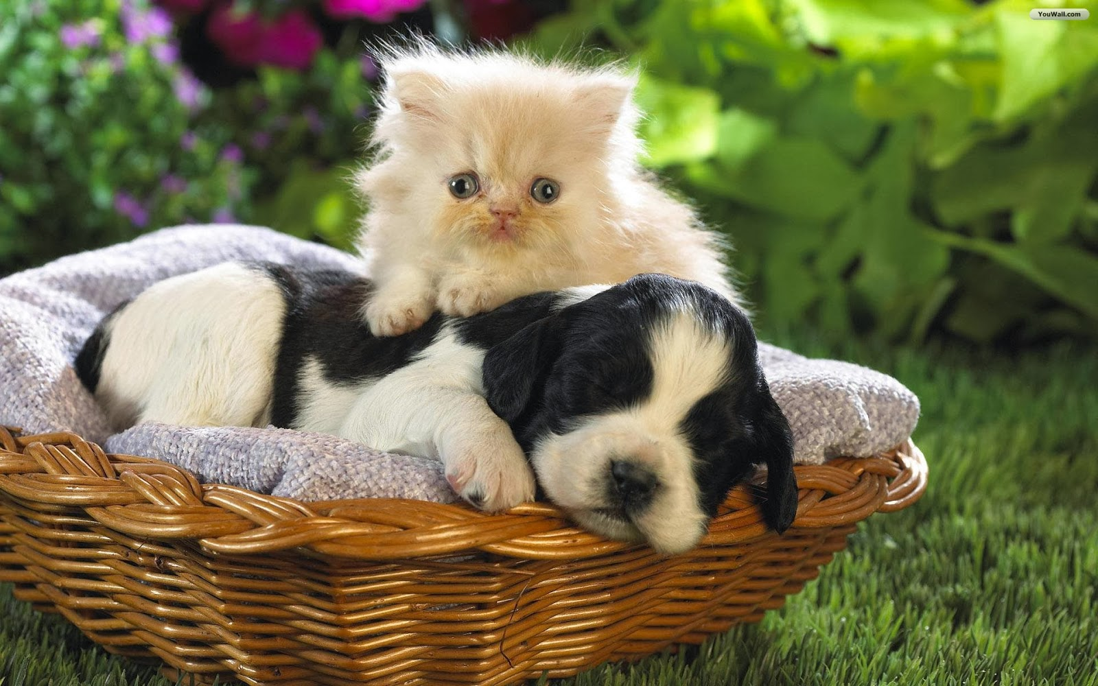 Cats and dogs Wallpapers 1600x1000