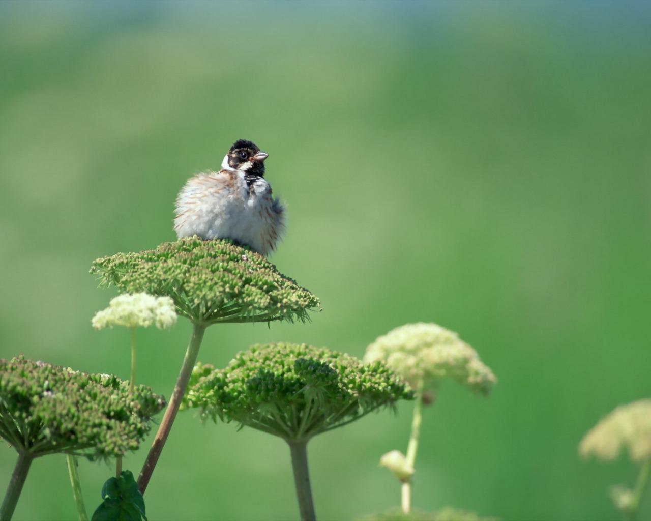 Humming Birds Screensavers download now 1280x1024
