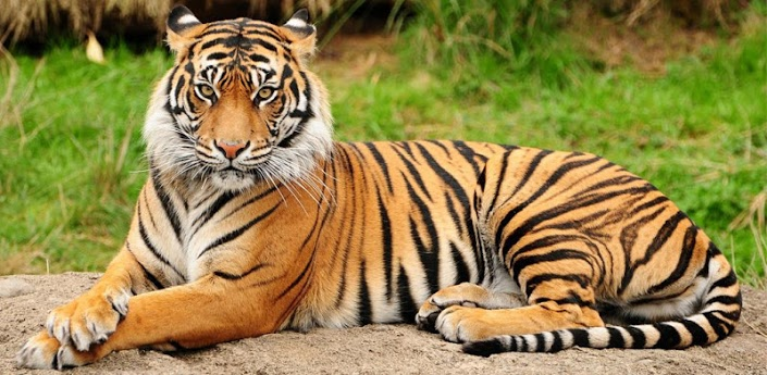 Wallpaper HD for Android Download Animals Live wallpapers 10 705x345