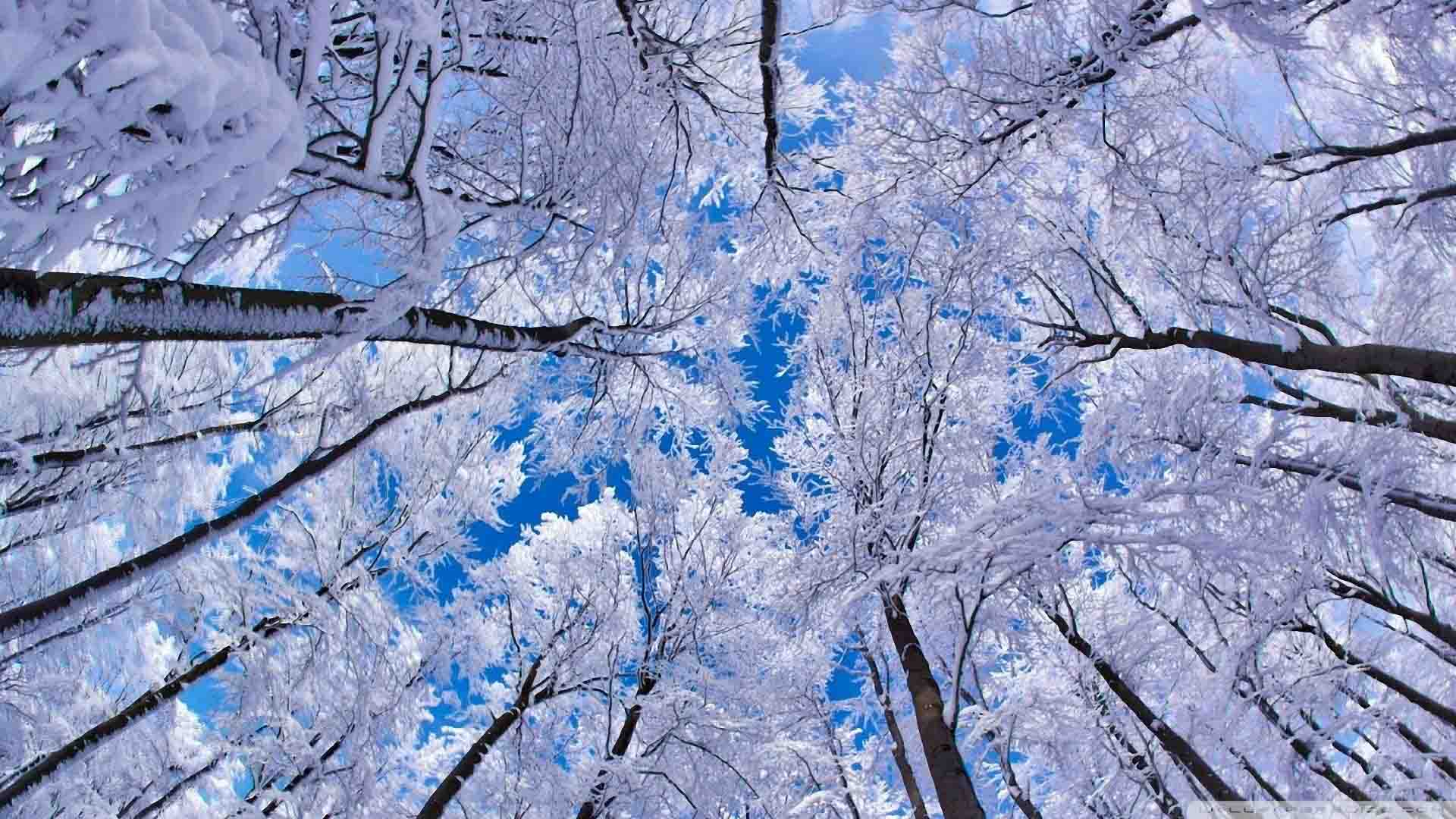 Winter Scenes Desktop Wallpaper The Best HD Wallpaper 1920x1080