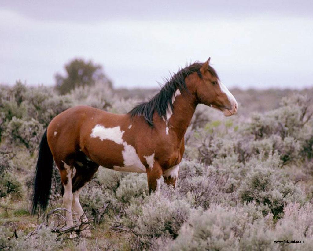 HD Animals Wallpapers Horses Wallpapers for Desktop 1024x819