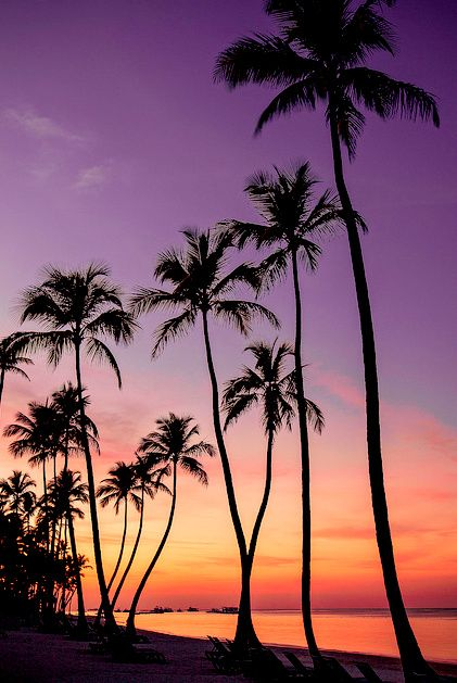 Unique Palm Trees Tumblr Wallpaper R And Decor