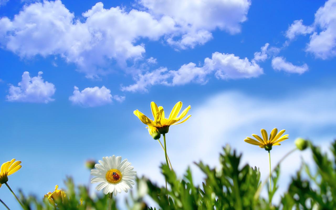 Spring flowers wallpaper 2506 1280x800