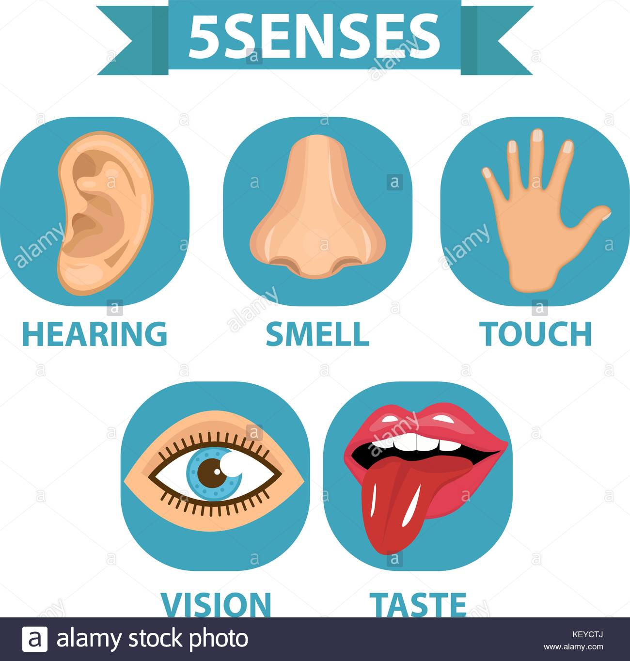 5 senses icon set Touch smell hearing vision taste Isolated 1300x1364