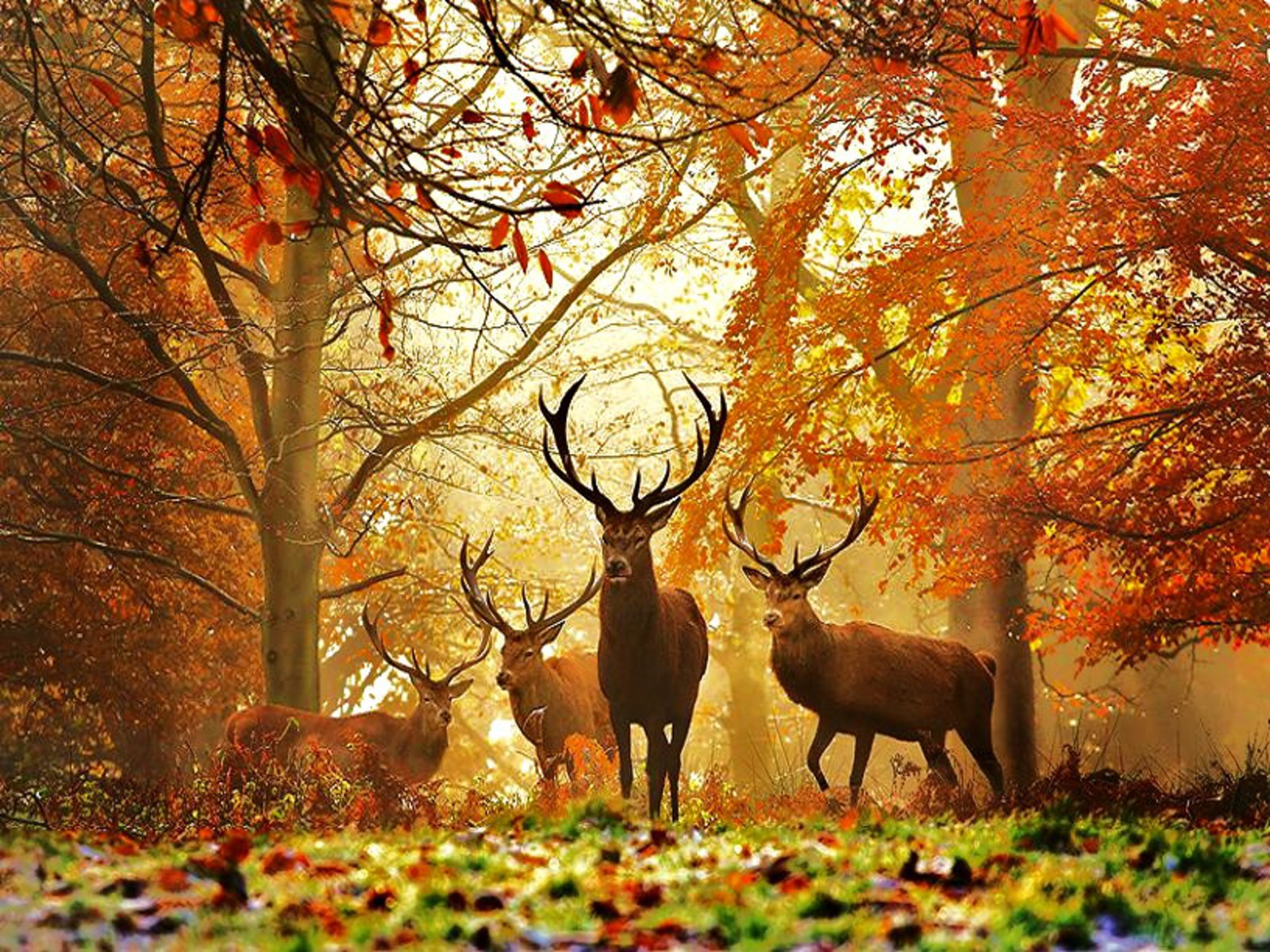 768 X 1024 Wallpaper Deer Hunting 1600x1200